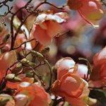 фото Искусственные цветы в интерьере от 26.03.2018 №029 - Artificial flowe - design-foto.ru