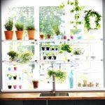 Фото Цветы в интерьере кухни от 26.09.2018 №093 - Flowers in the interior - design-foto.ru