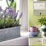 Фото Цветы в интерьере кухни от 26.09.2018 №140 - Flowers in the interior - design-foto.ru