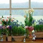 Фото Цветы в интерьере кухни от 26.09.2018 №156 - Flowers in the interior - design-foto.ru