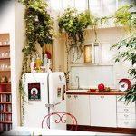 Фото Цветы в интерьере кухни от 26.09.2018 №170 - Flowers in the interior - design-foto.ru