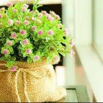 Фото Цветы в интерьере кухни от 26.09.2018 №177 - Flowers in the interior - design-foto.ru