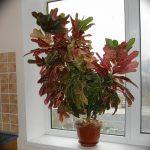 Фото Цветы в интерьере кухни от 26.09.2018 №187 - Flowers in the interior - design-foto.ru