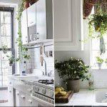 Фото Цветы в интерьере кухни от 26.09.2018 №199 - Flowers in the interior - design-foto.ru