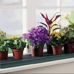 Фото Цветы в интерьере кухни от 26.09.2018 №245 - Flowers in the interior - design-foto.ru