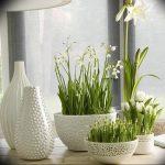 Фото Цветы в интерьере кухни от 26.09.2018 №251 - Flowers in the interior - design-foto.ru