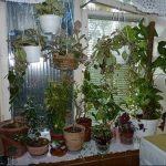 Фото Цветы в интерьере кухни от 26.09.2018 №252 - Flowers in the interior - design-foto.ru
