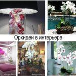 Орхидеи в интерьере - информация и фото примеры проектов