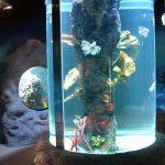 фото Аквариум в интерьере 28.11.2018 №065 - photo Aquarium in the interior - design-foto.ru