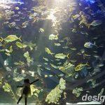 фото Аквариум в интерьере 28.11.2018 №108 - photo Aquarium in the interior - design-foto.ru