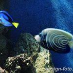 фото Аквариум в интерьере 28.11.2018 №113 - photo Aquarium in the interior - design-foto.ru
