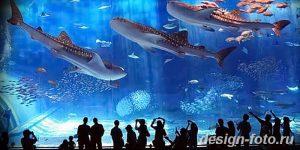 фото Аквариум в интерьере 28.11.2018 №155 - photo Aquarium in the interior - design-foto.ru