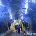 фото Аквариум в интерьере 28.11.2018 №158 - photo Aquarium in the interior - design-foto.ru
