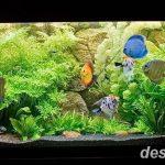 фото Аквариум в интерьере 28.11.2018 №283 - photo Aquarium in the interior - design-foto.ru