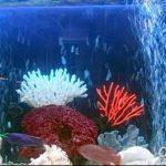 фото Аквариум в интерьере 28.11.2018 №288 - photo Aquarium in the interior - design-foto.ru