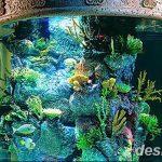 фото Аквариум в интерьере 28.11.2018 №292 - photo Aquarium in the interior - design-foto.ru