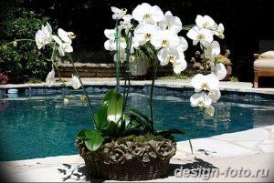 фото Орхидеи в интерьере 28.11.2018 №024 - photo Orchids in the interior - design-foto.ru