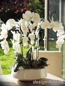 фото Орхидеи в интерьере 28.11.2018 №027 - photo Orchids in the interior - design-foto.ru