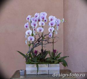 фото Орхидеи в интерьере 28.11.2018 №030 - photo Orchids in the interior - design-foto.ru