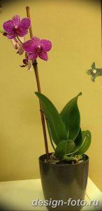 фото Орхидеи в интерьере 28.11.2018 №043 - photo Orchids in the interior - design-foto.ru