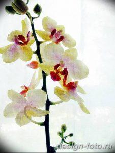 фото Орхидеи в интерьере 28.11.2018 №050 - photo Orchids in the interior - design-foto.ru