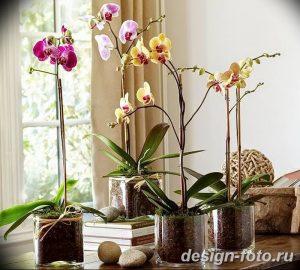 фото Орхидеи в интерьере 28.11.2018 №057 - photo Orchids in the interior - design-foto.ru