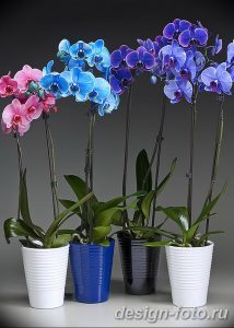 фото Орхидеи в интерьере 28.11.2018 №069 - photo Orchids in the interior - design-foto.ru