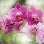 фото Орхидеи в интерьере 28.11.2018 №073 - photo Orchids in the interior - design-foto.ru