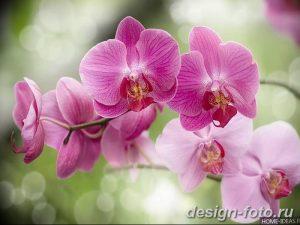 фото Орхидеи в интерьере 28.11.2018 №073 - photo Orchids in the interior - design-foto.ru