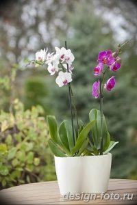 фото Орхидеи в интерьере 28.11.2018 №099 - photo Orchids in the interior - design-foto.ru