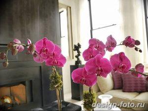 фото Орхидеи в интерьере 28.11.2018 №104 - photo Orchids in the interior - design-foto.ru