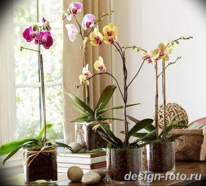 фото Орхидеи в интерьере 28.11.2018 №110 - photo Orchids in the interior - design-foto.ru