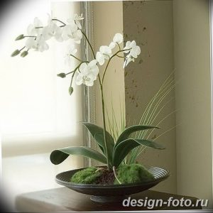 фото Орхидеи в интерьере 28.11.2018 №111 - photo Orchids in the interior - design-foto.ru