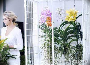 фото Орхидеи в интерьере 28.11.2018 №116 - photo Orchids in the interior - design-foto.ru