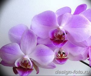 фото Орхидеи в интерьере 28.11.2018 №129 - photo Orchids in the interior - design-foto.ru