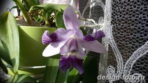 фото Орхидеи в интерьере 28.11.2018 №132 - photo Orchids in the interior - design-foto.ru
