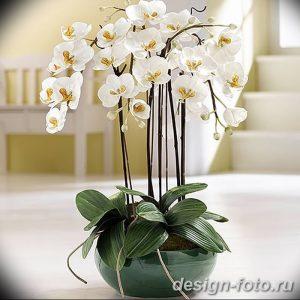 фото Орхидеи в интерьере 28.11.2018 №137 - photo Orchids in the interior - design-foto.ru