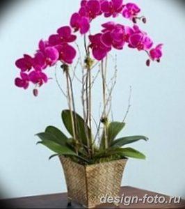 фото Орхидеи в интерьере 28.11.2018 №143 - photo Orchids in the interior - design-foto.ru