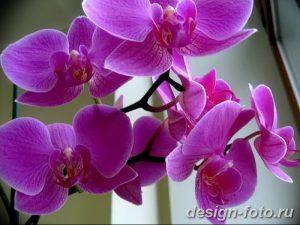 фото Орхидеи в интерьере 28.11.2018 №151 - photo Orchids in the interior - design-foto.ru