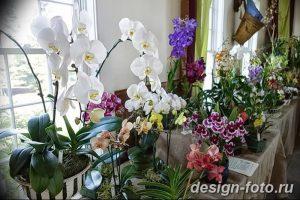 фото Орхидеи в интерьере 28.11.2018 №152 - photo Orchids in the interior - design-foto.ru