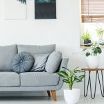 Plants next to grey couch in bright apartment interior with blac